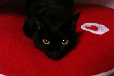 黒猫祭り♪黒猫に感謝する日